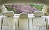 Fototapety back seat of the car.