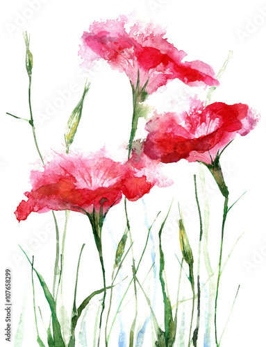 Pink petunia.Watercolor hand drawn illustration.White background. - 107658299