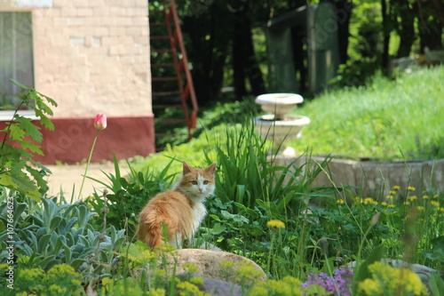 Poster Landschappen nature landscape summer cat