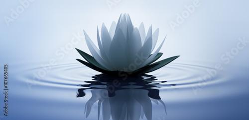 Lotusblüte in dunklem Wasser 2