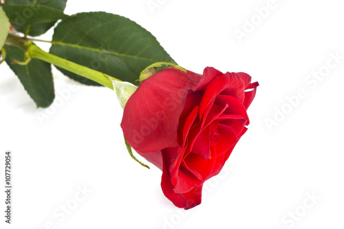 Staande foto Roses Beautiful Red Roses Flower Isolated on White