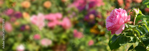 Zdjęcia na płótnie, fototapety, obrazy : Blumen 432