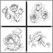 Obrazy na płótnie, fototapety, zdjęcia, fotoobrazy drukowane : Set of Romantic vector background with three echinaceas.