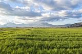 campi seminati a granaglie