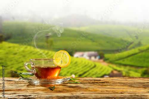 Fototapeta Cup of hot tea with plantation on background