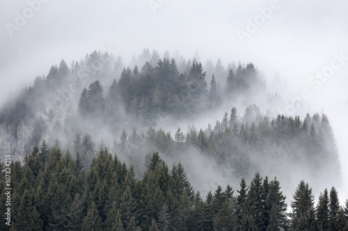 brume sapin montage brouillard altitude alpes voile paysage froi - 107824213