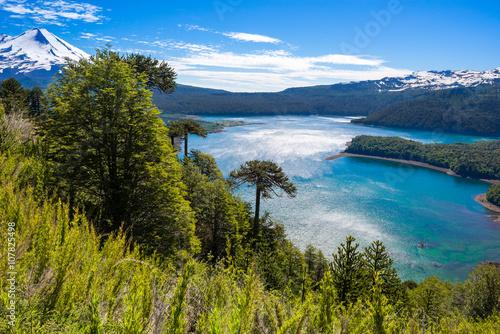 Araucaria forest in Conguillio National Park, Chile - 107825498