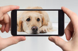 Sad labrador retriever in a mobile phone