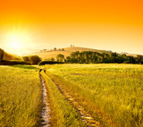 Tuscany wheat field hill at sunrise