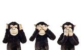 Three wise monkeys. See no evil, hear no evil, speak no evil cartoon monkeys