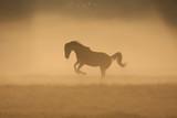 Paard in de mist, toonbeeld van kracht