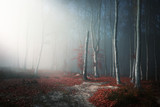 Light through the trees in foggy forest