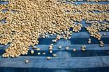 Fototapety Coffee beans dried