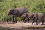 Ivindo NP, Gabon 2006. afrikansk skogselefant från den södra plattformen.Foto:Jan Fleischmann.jan.fleischmann@tele2.se