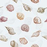pattern of the sea shells
