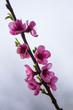 Obrazy na płótnie, fototapety, zdjęcia, fotoobrazy drukowane : Spring blossom flower