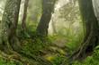 Obrazy na płótnie, fototapety, zdjęcia, fotoobrazy drukowane : Selva de Nepal
