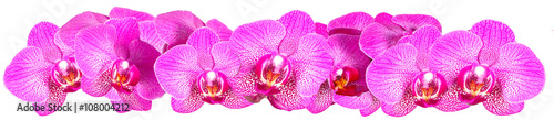 Panel Szklany Pink Orchid on white background panorama