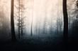 light in dark forest