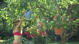 young beautiful woman with pink bra watering blooming flower in pot on tree branch at summertime. 4K UHD video clip.