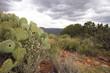 Arizona Desert Mountain
