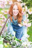 Fototapety Frau lächelnd beim einpflanzen der Blumen