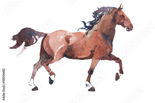 Juliste watercolor drawing of jogging horse, young mustang doing dogtrot aquarelle paint