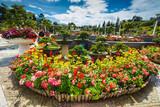 City flower garden in Dalat, Vietnam