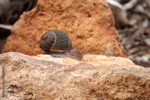 snail crawling on the stone nature