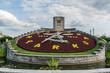 Clock flower of Niagara Parkway, Niagara Falls, Ontario, Canada.