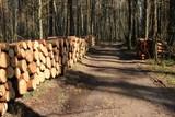 leśne rozlewisko wiosną