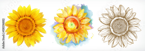 Sunflower, different styles, vector drawing, icon set