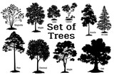 Fototapety Set Isolated on White Background Silhouettes Spring and Summer Plants, Trees and Bushes, Magnolia, Maple, Lilac, Castor, Acacia, Fir, Pine, Chestnut, Maple, Oak and Grass. Vector