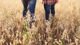 Rear view of legs of farmer and his son walking together in the wheat meadow