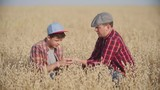 Farmer and his son sitting in the field of rye and looking at their grain crop