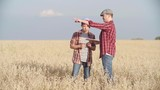 Father and son standing in the field of rye and using digital tablet for development of their farm