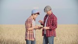 Farmer explaining his son how grow rye crop and showing him something on digital tablet