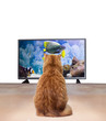 ginger cat watching TV