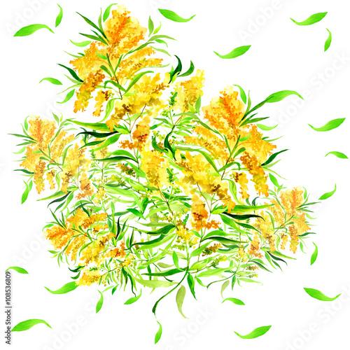 Zdjęcia na płótnie, fototapety, obrazy : Vintage pattern. Yellow garden flowers on a branch in watercolor. Mimosa