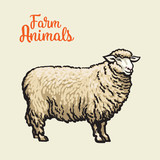 Fototapety White sheep isolated, vector sketch drawn by hand on a light background sheep, farm animals, cloven-hoofed livestock, sheep, sheep icon with thick fur