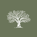 Beautiful magnificent olive tree silhouette on grey background. Infographic modern vector sign. 