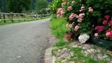 strada nel verde
