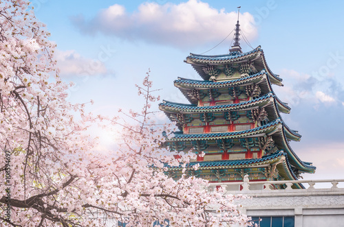 Poster cherry blossom in spring of Gyeongbokgung Palace in seoul,korea.