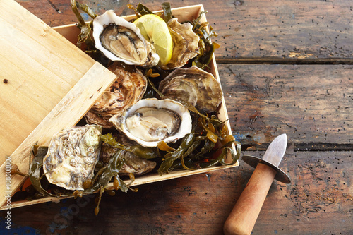 Crate of freshly harvested marine oysters
