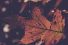 Vintage, liście