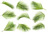 coconut leaf - 108643863