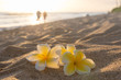 Plumeria flowers on the shore on sunset beach with golden sunlight and couple