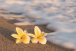 Plumeria flowers on the shore with blurry foam wave