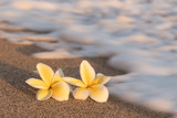 Plumeria flowers on the shore with blurry foam wave - 108664878