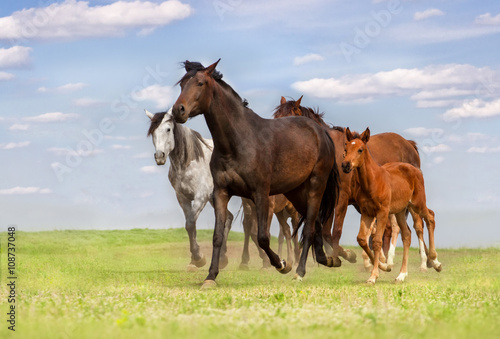 obraz PCV Horse herd run on spring pasture against blue sky